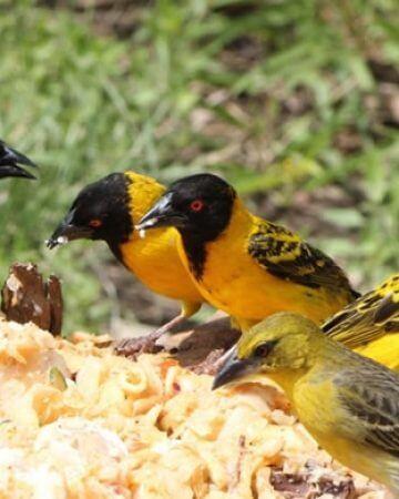 Bird Watching Safaris